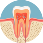 Image of a tooth and what it looks like when you seek a mercury free dentist in the Lincoln, NE area.